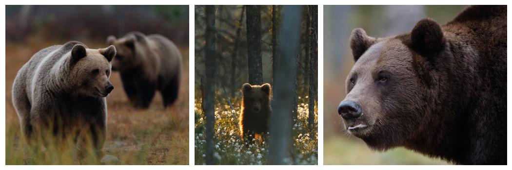finland_beren