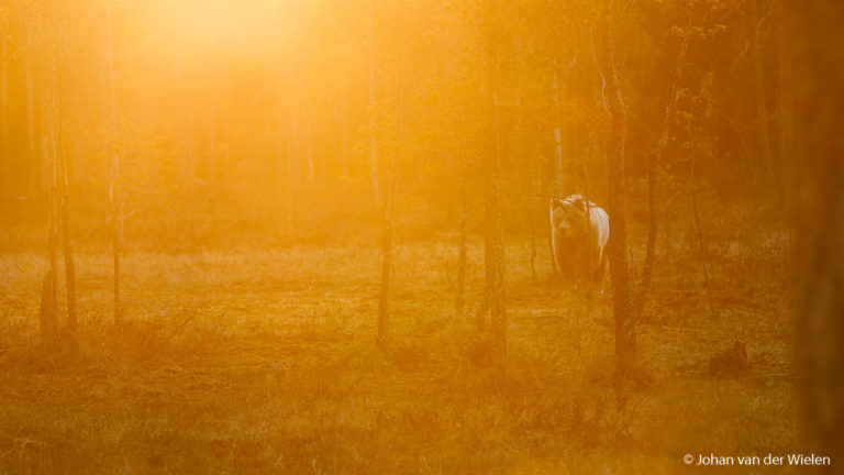 Reisverslag foto expeditie<br> ~ Finse Lente & Wildlife ~